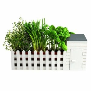 Novelty Indoor Herb Gardening Allotment Planter Gift Set