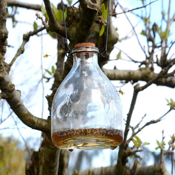 Wasp Catcher Trap Hanging Glass Bottle
